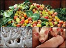 Resíduos Agropecuários
